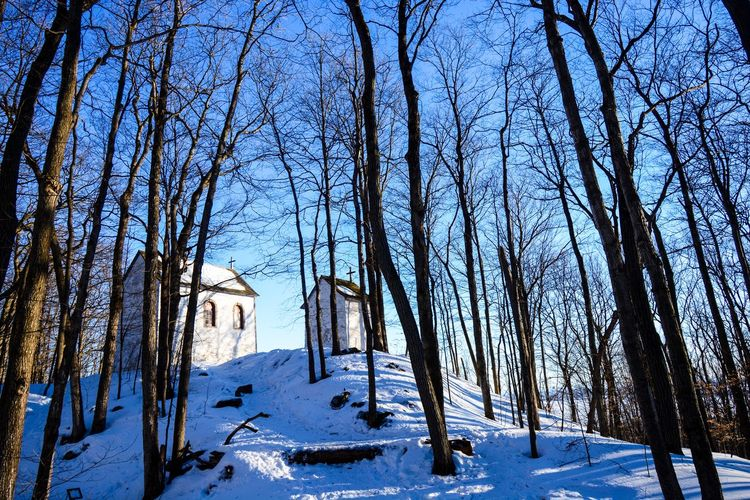 Winter views from Quebec Canada Snow Winter Cold Temperature Tree Bare Tree Plant Scenics - Nature Tranquility Nature Covering Sky Architecture Land Branch No People Tranquil Scene Beauty In Nature Building Exterior Built Structure Outdoors WoodLand Snowcapped Mountain