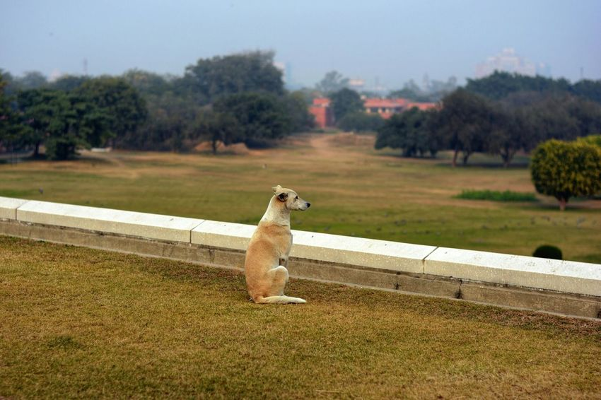 A dog looking over from the Lotus Temple gardens in New Delhi. :D India Delhi Lotus Dog Nature Animals