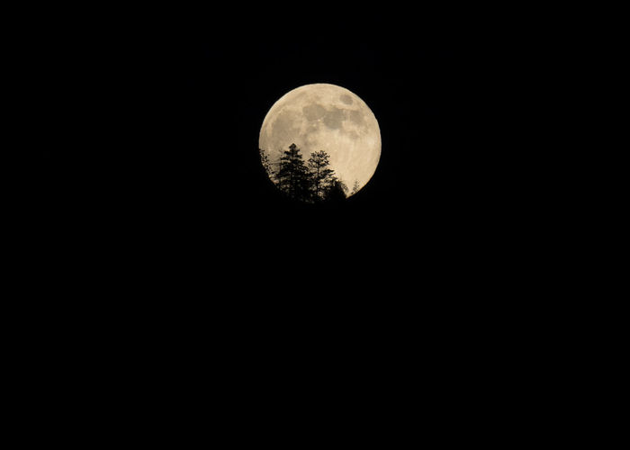 Closeup of Full Moon Rising Behind Pine Tree Silhouettes Big Moon Camping Full Moon Giant Moon Halloween Moon Nature Photography Nighttime Yosemite Yosemite National Park Closeup Craters Creepy Detail Forest Photography Full Moon Rising Moon Craters Moonlight Natural Wonders Rising Moon Room For Text Sierra Nevada Spooky Supermoon Tree Silhouette