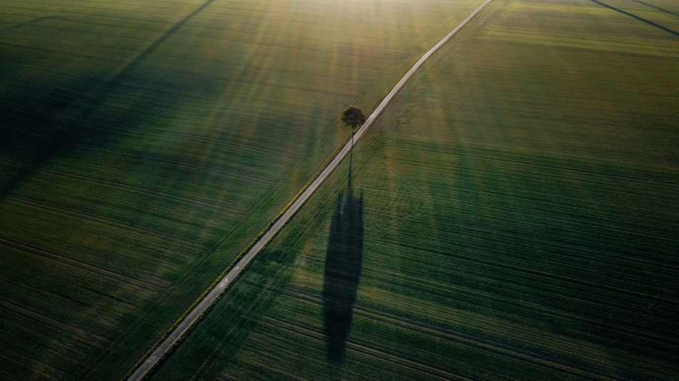- THE TREE - No People Road Day Nature Landscape Transportation Tranquility Land Outdoors Field Scenics - Nature Sunlight Grass Green Color Rural Scene Plant Tree Sunset Sunset_collection EyeEm Best Shots Drone  Dronephotography DJIxEyeEm Check This Out Drone Photography