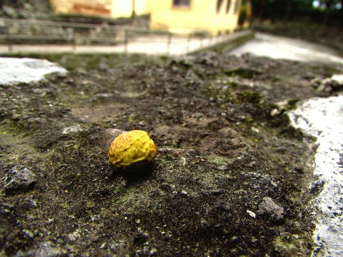 Canonsx510 River Rioorizaba Seed