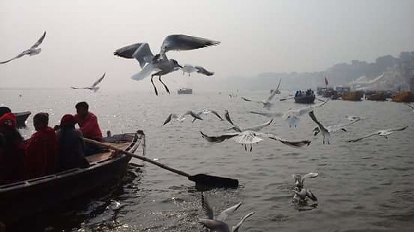 Nature Beautifulinnature Naturalbeauty Photography Landscape Indian Rivers Ganges River Banarus Flying Birds View From The Boat Evening Photography