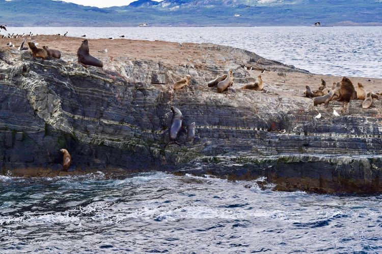 Scenic view of sea lions and rocks