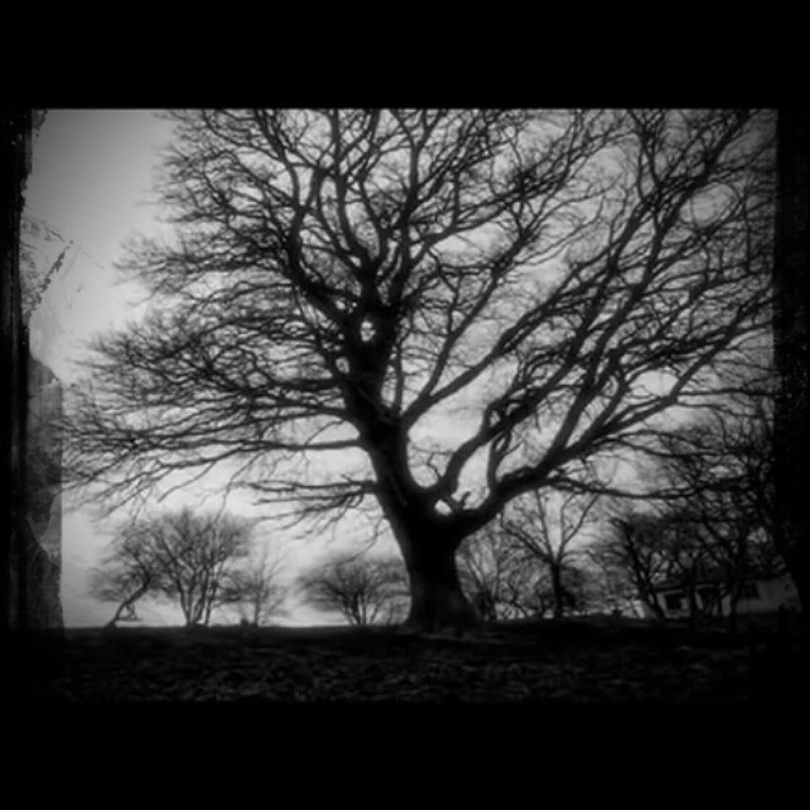 bare tree, tree, branch, silhouette, tranquility, nature, tranquil scene, auto post production filter, transfer print, beauty in nature, sky, tree trunk, scenics, field, dusk, landscape, outdoors, no people, weather, low angle view