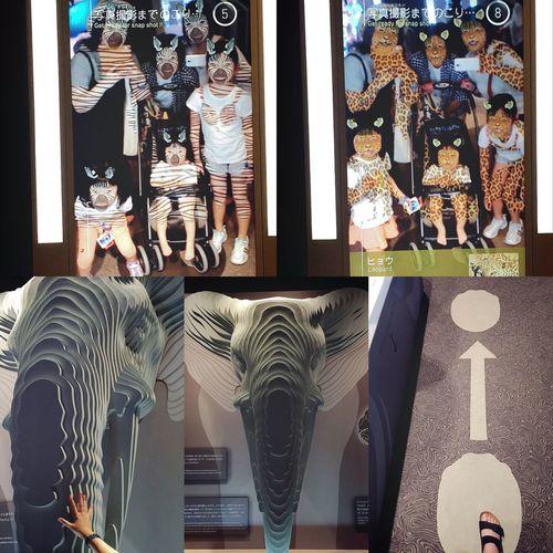 Orbi⑤ オービィの館内には、おもしろいフォトスポットがいくつかあります。 不思議な鏡『アニマルセルフィー』では、鏡に映った自分たちに、ツノが生えたり、動物と同じ模様に変身できるおもしろいCGの合成映像が流れます🐅🐆 笑いすぎた映像遊びが、すごくおもしろくて楽しかったです😆👏🏼👏🏼👏🏼 シマウマとヒョウのほかにも、パンダやトラ、ナポレオンフィッシュやクリオネなどなど…海のいきものたちの映像もたくさんありました🐼🐯🐠🦀 ここで、かなり遊びました。笑 爆笑映像遊びをしたあとは、ワイルドジャーニー『エレファンツ』で、アフリカゾウの過酷な環境を必死に生き抜く姿を、映像を見ながら全身で体感しました🐘 映像を見る前に、ゾウさんの等身大と自分を比較😃🐘 ゾウさんのお鼻をなでなで🐘🖐🏼✨ 私の腕にはリストバンド🖐🏼💙 (オービィ受付で借りるリストバンドは、フォトスポットなどで撮った写真を保存して、ショップで写真を買うことができるモノなのです✋🏼💙) ゾウさんの歩幅も比較👣 おおきないっぽ🐘✨ もすこし、地球や生命の神秘を体感します🤗 つづく。 Orbi OrbiYokohama オービィ オービィ横浜 みなとみらい マークイズ アニマルセルフィー エレファンツ ゾウ アフリカゾウ 合成写真 合成映像