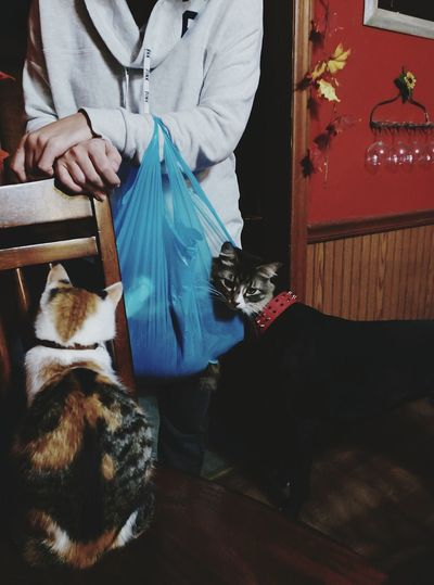 Shoots That Make You Look Twice Dog Cat In A Bag Human In My Kitchen Lots Going On Cant Explain. Check This Out Pet Portraits