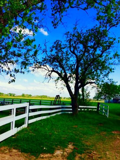 Tree Grass Nature No People Sky Field Day Tranquility Outdoors Green Color Growth Landscape Scenics Beauty In Nature Heyne Ranch