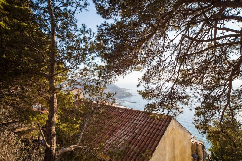 scenic view of Castellabate coast among trees Beauty In Nature Campania Castellabate Cilento Coastline Italy Landscape Nature Sky Trees Unusual View