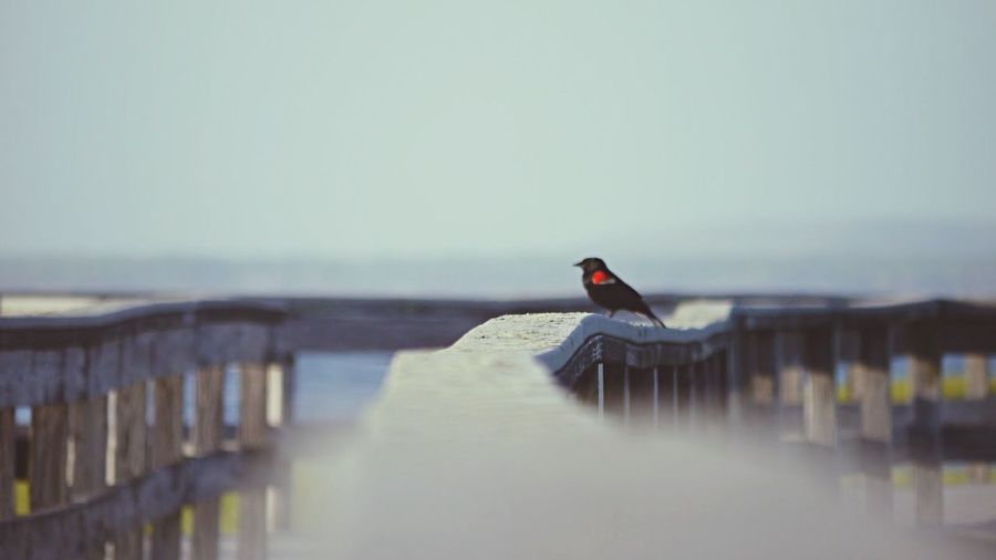 Wild Life Fire Island New York Bird Photography Bird