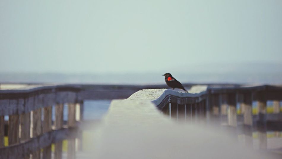 Wild Life Fire Island New York Bird Photography Bird