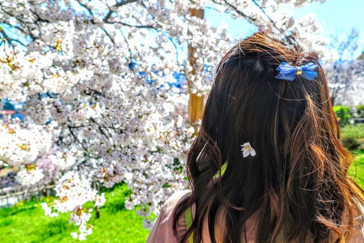 Rear view of woman standing by cherry blossom