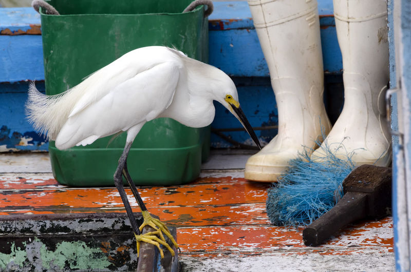 Close-Up Of White Snowy Egret On Deck Of Boat