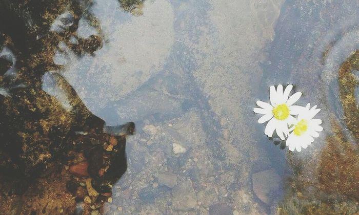 Flowers Liquid