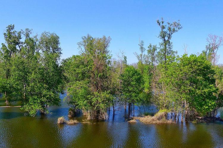 A bayou in the
