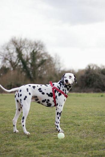 Dog On Landscape Against Sky