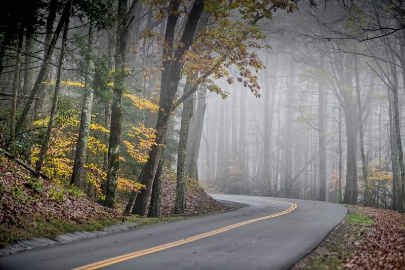 Tree Plant Forest Road Transportation Fog Land Nature Beauty In Nature Autumn The Way Forward Tranquility Tree Trunk Trunk No People Day Tranquil Scene Direction Change WoodLand Outdoors Treelined
