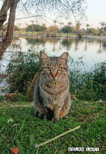 Cat EyeEm Selects Fun Photography Matisyahu Domestic Cat Animal Themes Pets Domestic Animals Sitting Outdoors Nature Sky No People