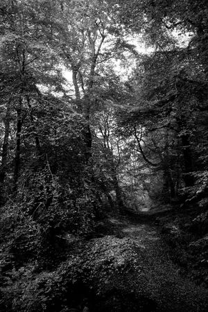Nature Redburn Country Park Blackandwhite Forestwalk Forest Photography Forest Path Holywood County Down Northern Ireland Beauty In Nature Deep Woods
