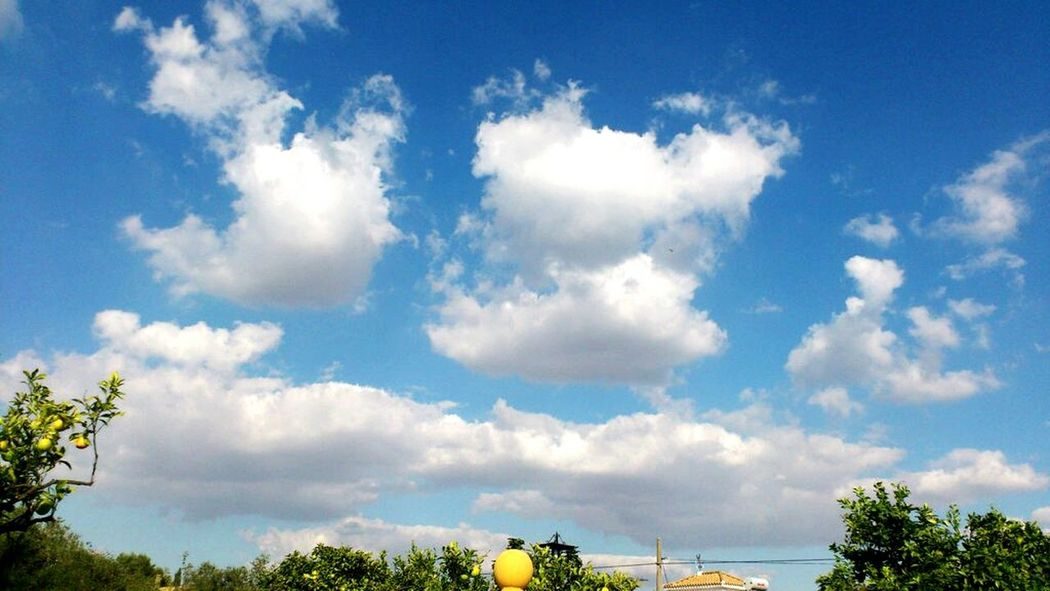 Tree Sky Tranquil Scene Tranquility Scenics Beauty In Nature Blue Cloud Nature Cloud - Sky Day Growth Solitude Non-urban Scene Outdoors No People Majestic Rural Scene Remote Cumulus Cloud
