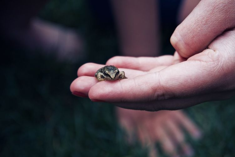 Baby Frog EyeEm Best Shots Frog Hands Nature Amphibian Animal Wildlife Animals In The Wild Body Part Cigarette  Close-up Day Finger Focus On Foreground Hand Holding Human Body Part Human Hand Marine Men One Animal One Person Outdoors Young Animal A New Beginning