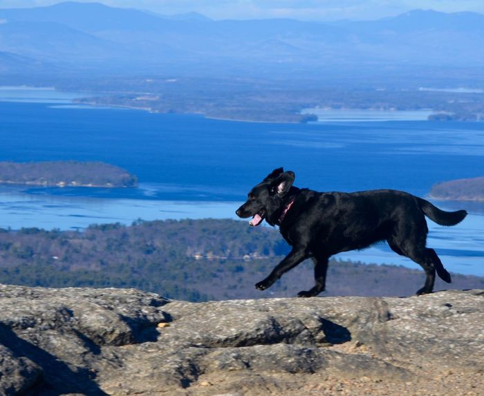 Lake Labrador Retriever lScenics Cold Temperature No People Beauty In Nature Water Black Color Mountains Mountain Range Rocks And Water Running Dog View From Above Hikingadventures The Great Outdoors - 2017 EyeEm Awards Pet Portraits