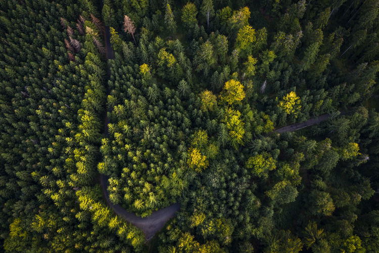 Aerial view of a forest from nature photography. Aerial Shot Autumn Autumn colors Drone  Drone Shot Drones EyeEm Nature Lover EyeEmNewHere Green Nature Road Aerial Aerial Landscape Aerial Photography Aerial View Aerialphotography Drone Photography Dronephotography Droneshot Environment Forest Full Frame Landscape Non-urban Scene Outdoors