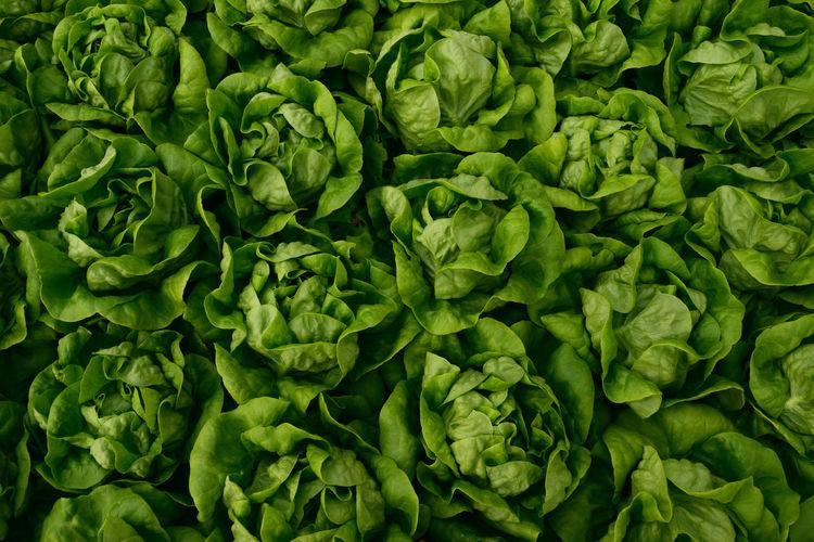 Full frame shot of lettuce