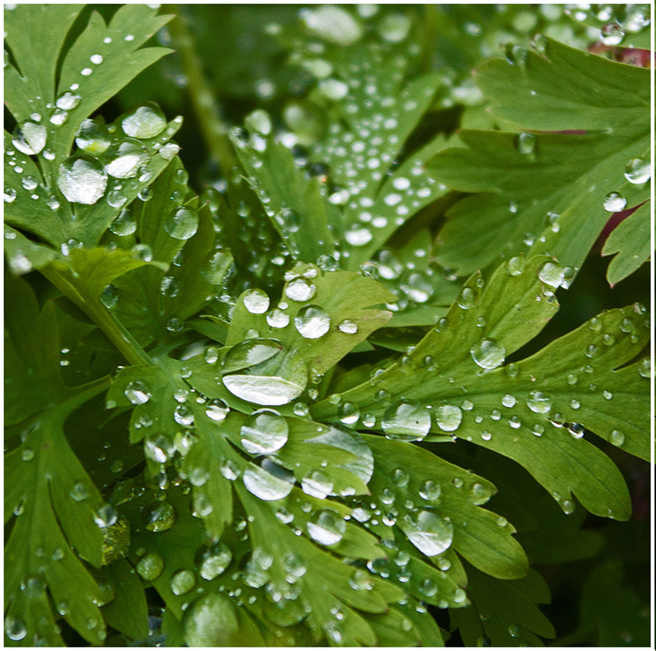 drop, water, leaf, wet, nature, green color, raindrop, freshness, droplet, growth, close-up, no people, backgrounds, full frame, day, beauty in nature, plant, outdoors, fragility