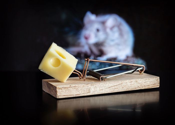 Close-up of mouse trap