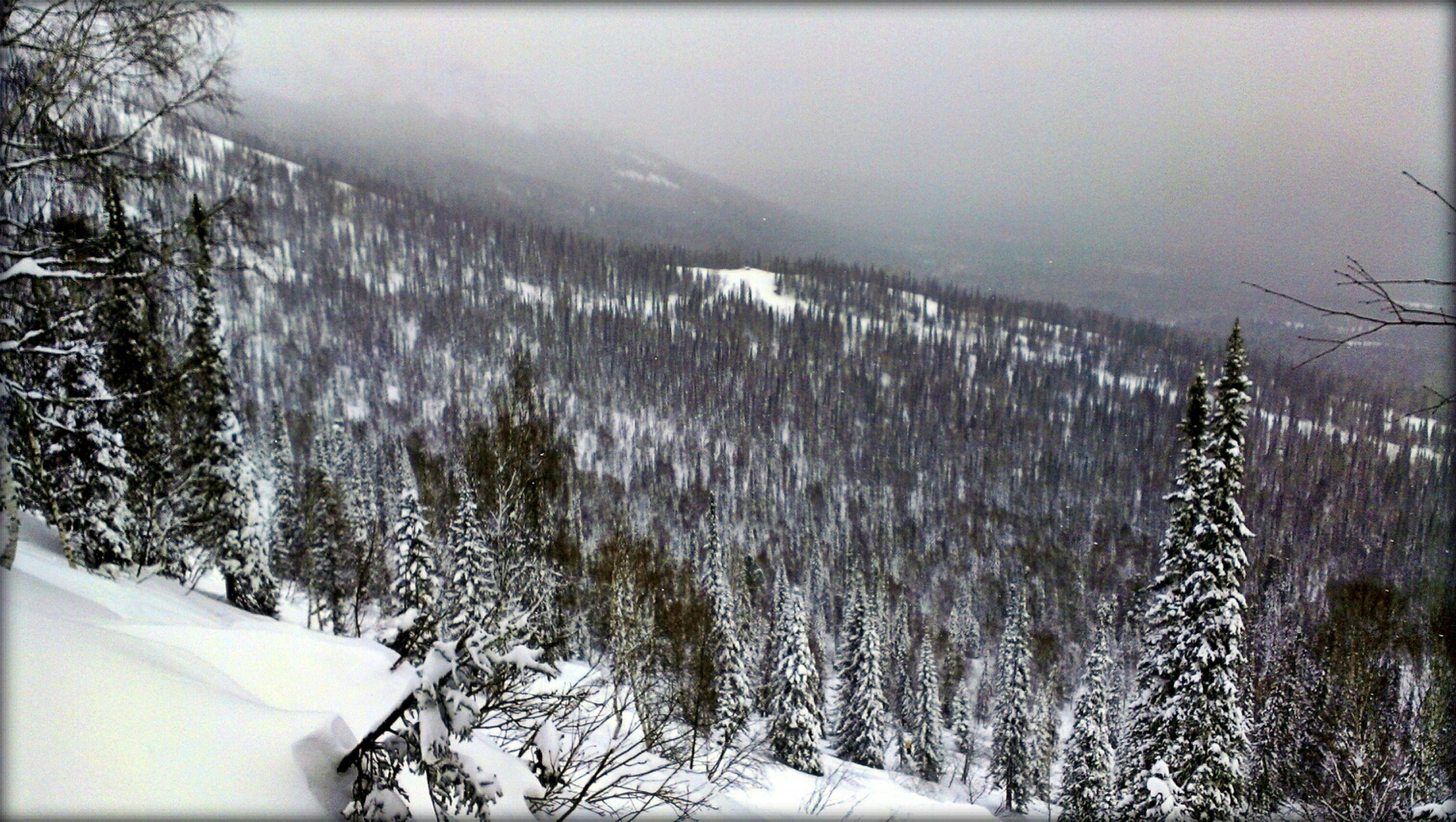 snow, winter, cold temperature, season, weather, frozen, tree, covering, tranquility, tranquil scene, nature, covered, beauty in nature, white color, scenics, landscape, snow covered, cold, non-urban scene, bare tree