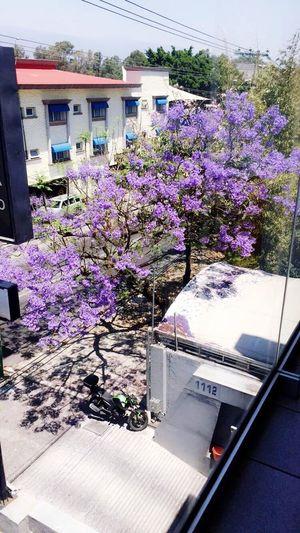 Urban Spring Fever 💕🌸 Cuernavaca