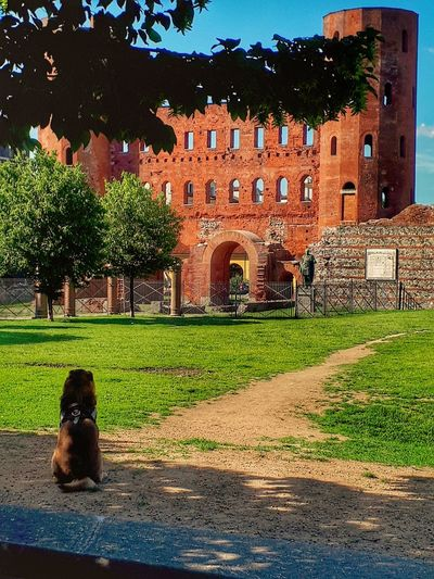 Porta Palatina Dog Smart Dog Italy Piedmont Italy Turin Walking Around The City  Tree Architecture Building Exterior Built Structure Ancient Rome History Historic Building Historic Archway Ancient