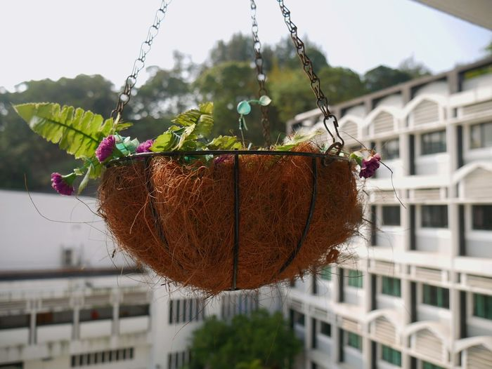 Hanging Growth Day No People Agriculture Plant Outdoors Nature Close-up Sky Freshness Hong Kong