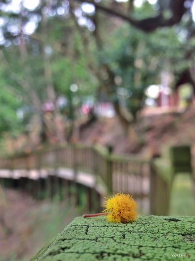 Xiamen IPhoneography Iphonephotography Taking Photos Flowers Flower Green Nature Bokeh