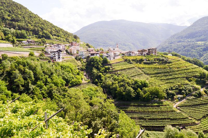Scenic landscape from bhutan