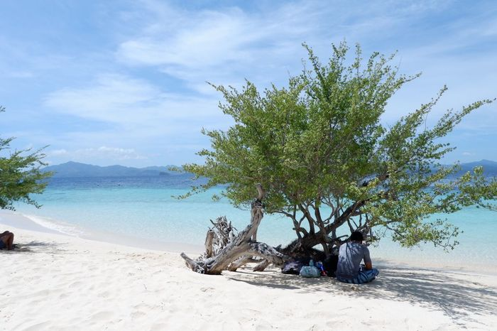 Beach Water Land Plant Sand Tree Sky Sea Beauty In Nature Nature Scenics - Nature Cloud - Sky Tranquility No People Day Tranquil Scene Sunlight Outdoors Growth