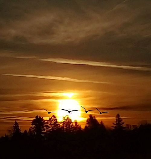 Oregon Sunrise Dramatic Sky Beautiful Sunrise Amazing Views Birds Birds Of EyeEm  Morning Photography Goodmorning EyeEm  Dawn Waking Up Happiness Is.... Take It All In Orange Sky Its A Beautiful Morning! Birds In Flight Forest Photography Calm Point And Shoot Camera Ready Outdoor Photography Magnificent Mile A View To Die For Fresh On Eyeem  Click Click 📷📷📷 Visions Creation Of God ! Yesterday Morning Sunset No People Beauty In Nature Sky Shades Of Winter An Eye For Travel Press For Progress Mobility In Mega Cities Colour Your Horizn