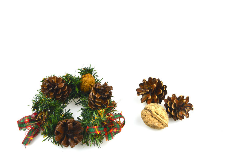 High angle view of pine cones on white background