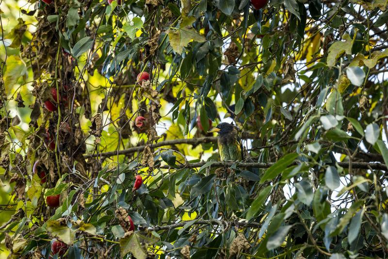 Full frame shot of fruit growing on tree