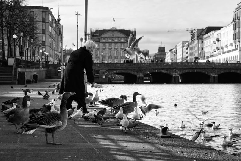 Bird Water Animal Themes Animal Architecture Vertebrate Animals In The Wild Group Of Animals Animal Wildlife City Built Structure Building Exterior River Day Transportation Bridge Nature Connection Bridge - Man Made Structure Blackandwhite Streetphotography The Art Of Street Photography