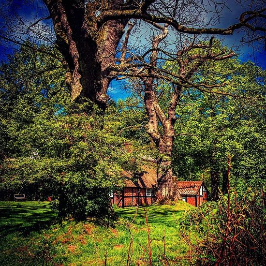 Half timber structure house. Halftimberedhouse Halftimbered Northsea Plant Tree Built Structure Nature Beauty In Nature Building Exterior Building Foliage Tranquility