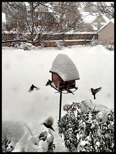Epic snow in DC area Snowzilla Blizzard 2016 Epic Snow