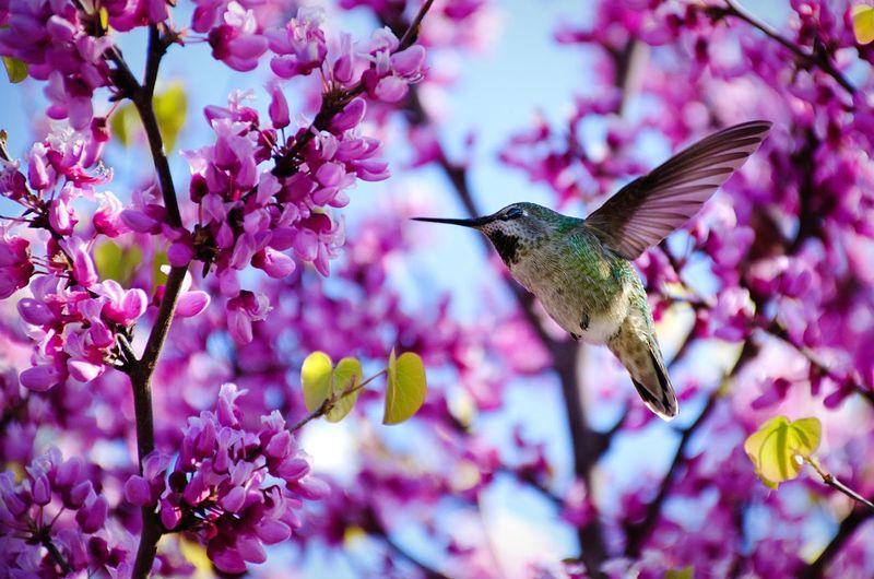 Finding beauty in the everyday. Hike around Lafeyette Reservoir. Urban Nature EyeEm Best Shots Flowers Birds Getting Inspired Hiking