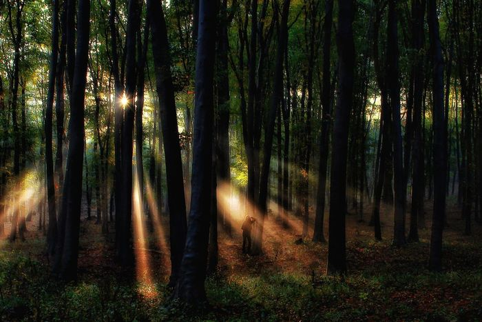 Light Down Forest Tree Nature Beauty In Nature Plants Plant Downlights Backgrounds Wallpaper Art Green Color Green Forest Photography Woman