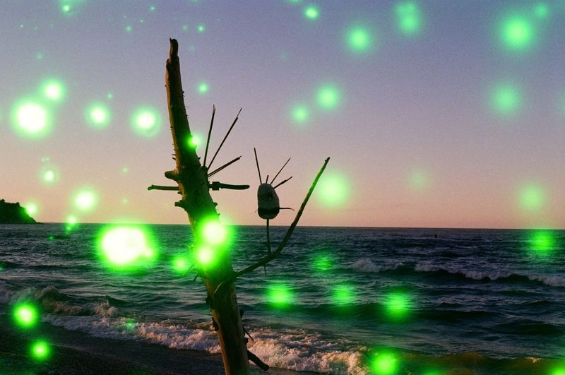 Beach Beauty In Nature Green Color Horizon Horizon Over Water Illuminated Land Lens Flare Nature Night No People Outdoors Plant Scenics - Nature Sea Sky Sunset Tranquility Water