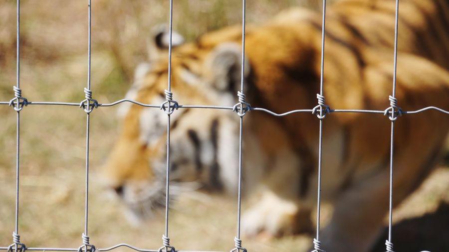 Close-Up Of Dog Seen Through Metal Fence
