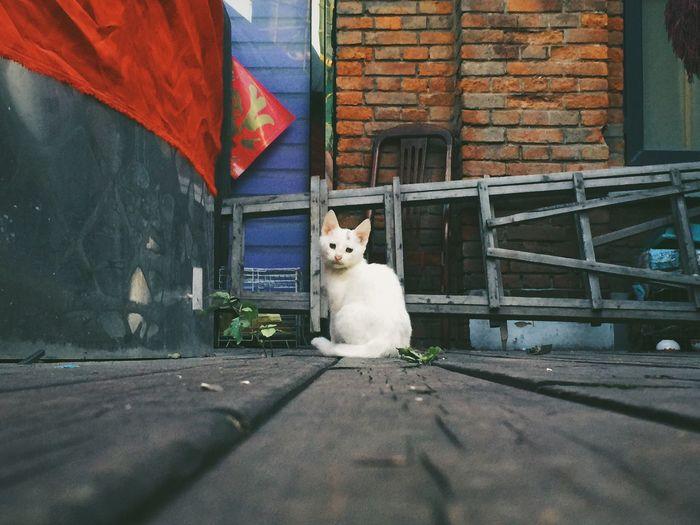 可怜的猫咪 男仔很忙 Enjoying Life Iphone 6 Plus Relaxing 天津