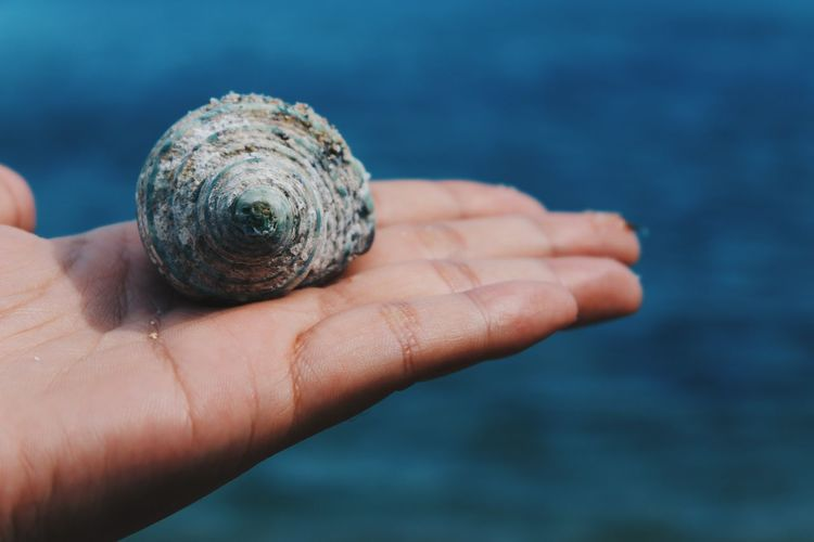 Close-up of hand holding seashell against sea