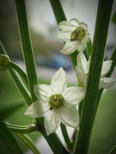 Macro Beauty Flower