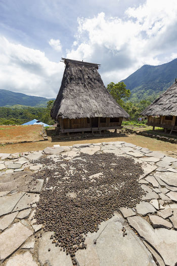 Coffee drying on large stone slabs in the middle of traditional houses in the Wologai village near Kelimutu in East Nusa Tenggara, Indonesia. Coffee Houses INDONESIA Moni Rice Tourist Travel Tree Art Attraction Authentic Culture Destination East Nusa Tenggara Ethnic Hard Wood House Kelimutu Landmark Sculpture Tourism Traditonal Tribe Village Wologai